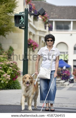 Senior blind woman crossing the street with help of guide dog - stock photo