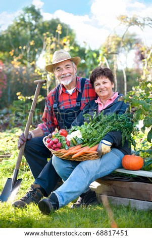 Senior couple with a basket of harvested vegetables - stock photo