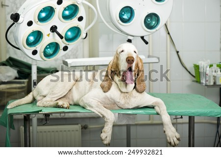 Senior dog at the vet clinic - stock photo