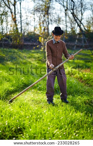 Senior farmer mowing the lawn with a scythe, traditionally