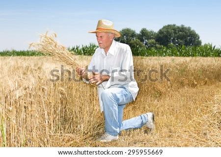 Senior farmer standing on knees in ripe barley field and looking at picked stalks - stock photo