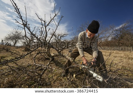 Senior farmer trimming trees or chopping the branches in the orchard - stock photo