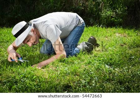 Senior gardener on his knees cutting grass with scissors. - stock photo