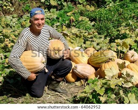 senior gardener with pumpkins - stock photo
