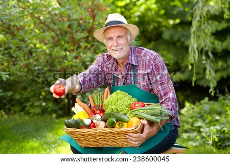Senior gardener with vegetables is presenting a tomato - stock photo