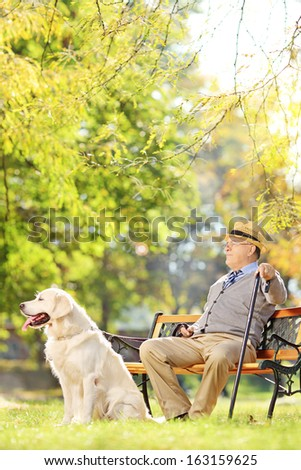 Senior gentleman seated on wooden bench with a labrador retriever relaxing in a park - stock photo