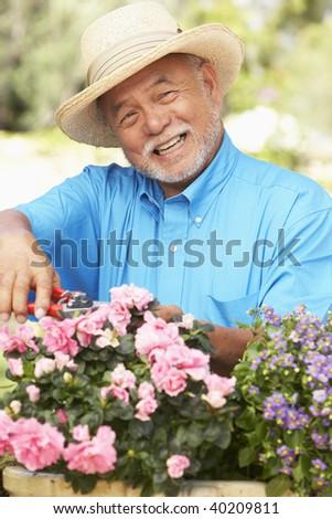Senior Man Gardening - stock photo