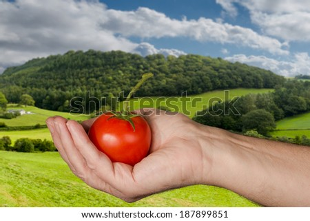Senior man holding a bright red large organic tomato with stem in front of a rural farm with fields and wooded hillside on a bright sunny day in summer - stock photo