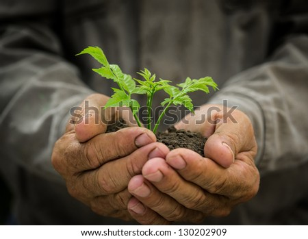 Senior man holding young green tree in hands against grunge background. Environmental protection concept - stock photo