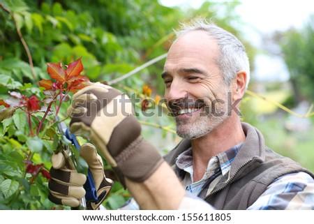 Senior man in garden cutting roses - stock photo