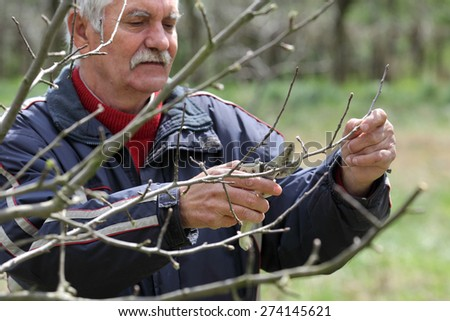 Senior man pruning tree in orchard, active retirement, selective focus on hands - stock photo