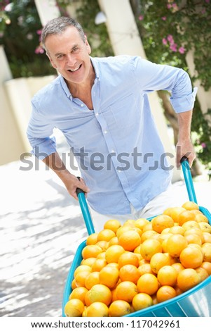 Senior Man Pushing Wheelbarrow Filled With Oranges