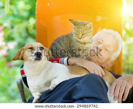 Senior man sleeping in sunbed in courtyard while dog and cat sitting in his lap - stock photo