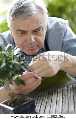 Senior man taking care of bonsai plant - stock photo