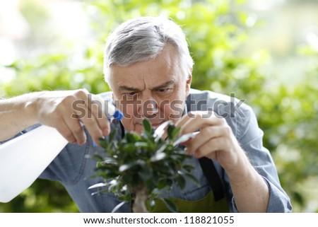 Senior man watering bonsai leaves - stock photo