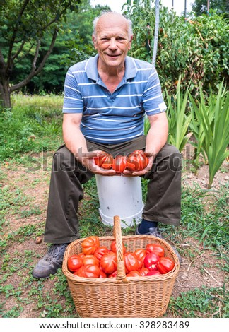 Senior man with a basket of harvested tomatoes in the garden