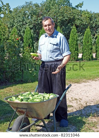 Senior man with wheelbarrow full of cucumbers