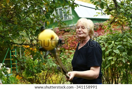 senior pensioner woman plucking apples in the garden - stock photo
