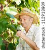 Senior viticulturist with wineglass on vineyard background - stock photo