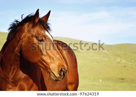 Senior Warmblood Mare in Pasture - stock photo
