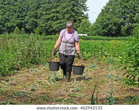 Senior woman carries buckets with harvested potatoes and garden fork in hands.