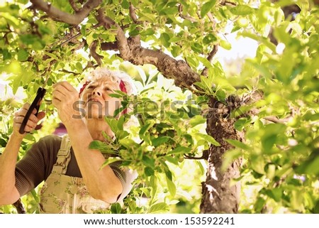Senior woman cutting dried buds from the tree. Elder woman gardening in her farm. - stock photo