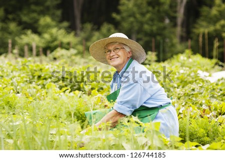 Senior woman gardening - stock photo