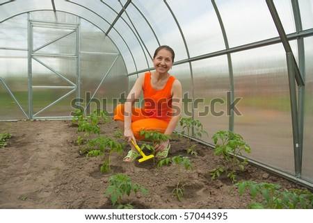 Senior woman gardening   in a domestic garden. - stock photo