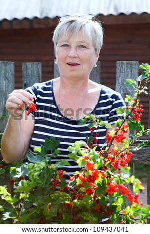 Senior woman in own garden eating red currants berries from brunch