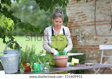 Senior woman preparing aromatic herbs in pot - stock photo