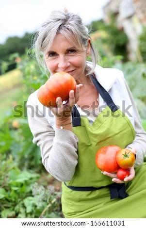 Senior woman tasting fresh tomatoes from garden - stock photo