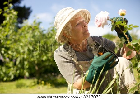 Senior woman wearing sun hat checking flowers in garden outdoors. Copy space. - stock photo