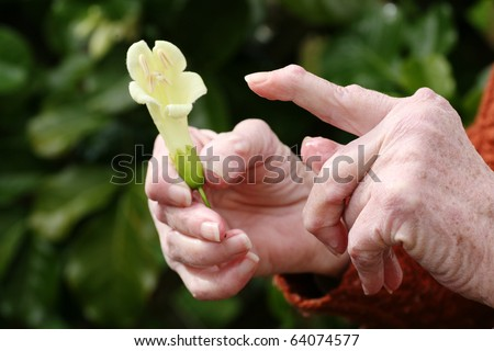 Senior woman with rheumatoid arthritis pointing at a flower she is holding - stock photo