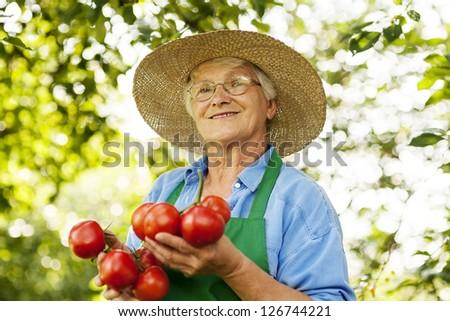 Senior woman with tomatoes - stock photo