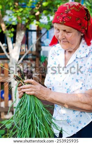 Senior woman working in her backyard garden. Gardening, harvest. Healthy lifestyle - stock photo