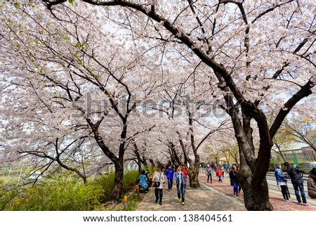 SEOUL, KOREA-APRIL 19: The ninth Yeouido Spring Flower Festival is being held in Yeouiseo-ro on April 19, 2013 in Seoul, Korea. Visitors are enjoying the blossoms. - stock photo