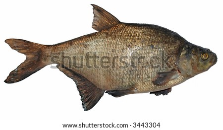 separated image of bream