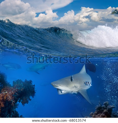 Separated. The Bottom with wild big shark that holding piece of prey on mouth swimming over coral reef surrounded by fish in blue deep Top part is a cloudy tropical seascape with breaking surfing wave - stock photo