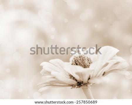 Sepia flower background - stock photo