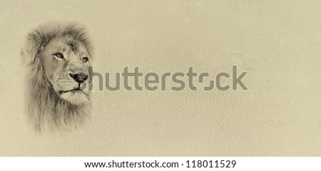 Sepia Toned Lion Face with Text Card Banner - stock photo