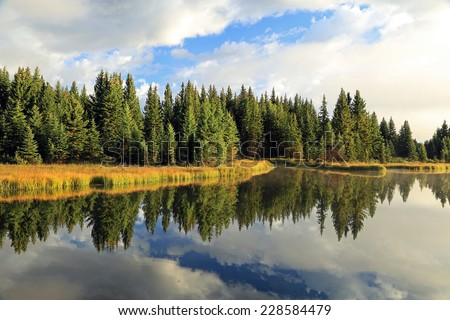 Serene forest reflection in Wyoming, USA.