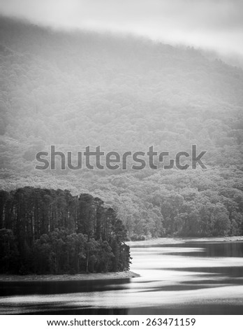 Serene forest with mist looking out over a calm lake in black and white - stock photo