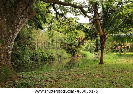 Serene green landscape featuring a stream and palm trees.