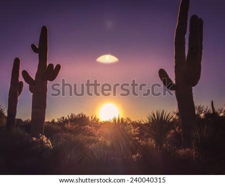 Serene iconic Arizona desert morning sunrise with enormous powerful sun on horizon line framed by Saguaro cactus - gorgeous lens flare. - stock photo