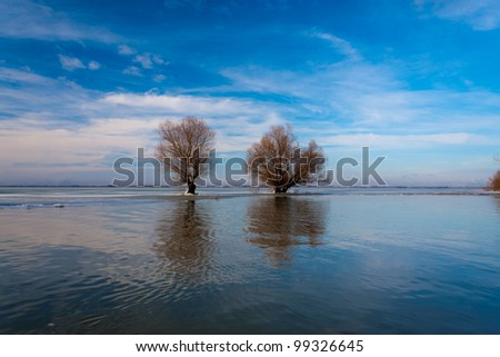 serene image from Danube Delta with blue sky, water and willows - stock photo