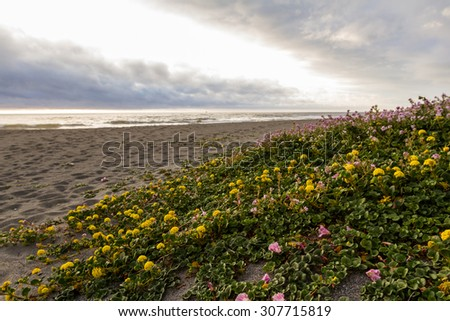 serene landscape of the northern California coast with beaks in the clouds and fog and blooming succulents covering the sand - stock photo