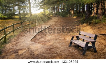 Serene rural path in the forest winding into the distance with an empty bench in the foreground and rays of light shining through the trees - stock photo