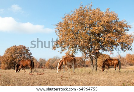 Serene scene of three horses grazing in a sunny autumn pasture