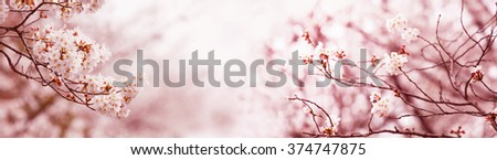 Serene spring cherry blossoms, Title wide header dimension image. Intentionally shot in surreal impressional color. - stock photo