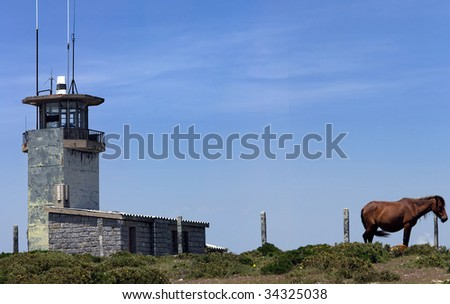 Serene view of a wild horse next to an abandoned fire lookout tower.